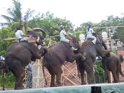 Taman Safari - Gajah