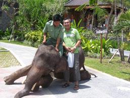 Taman Safari - Gajah Dad
