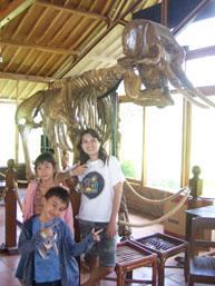 Taman Safari - Kerangka Gajah