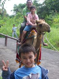 Taman Safari - Unta